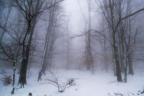 macvanin Pod snegom i maglom