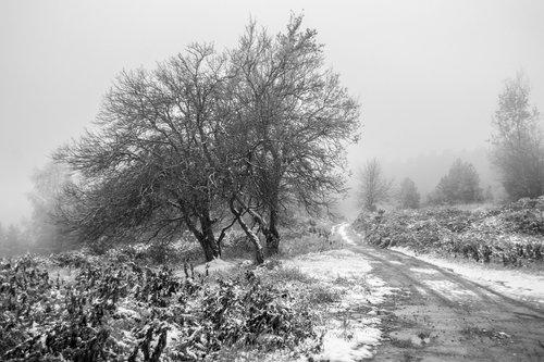 macvanin Zimski pejzaž