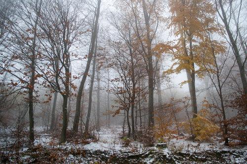 macvanin zimski pejzaž 3
