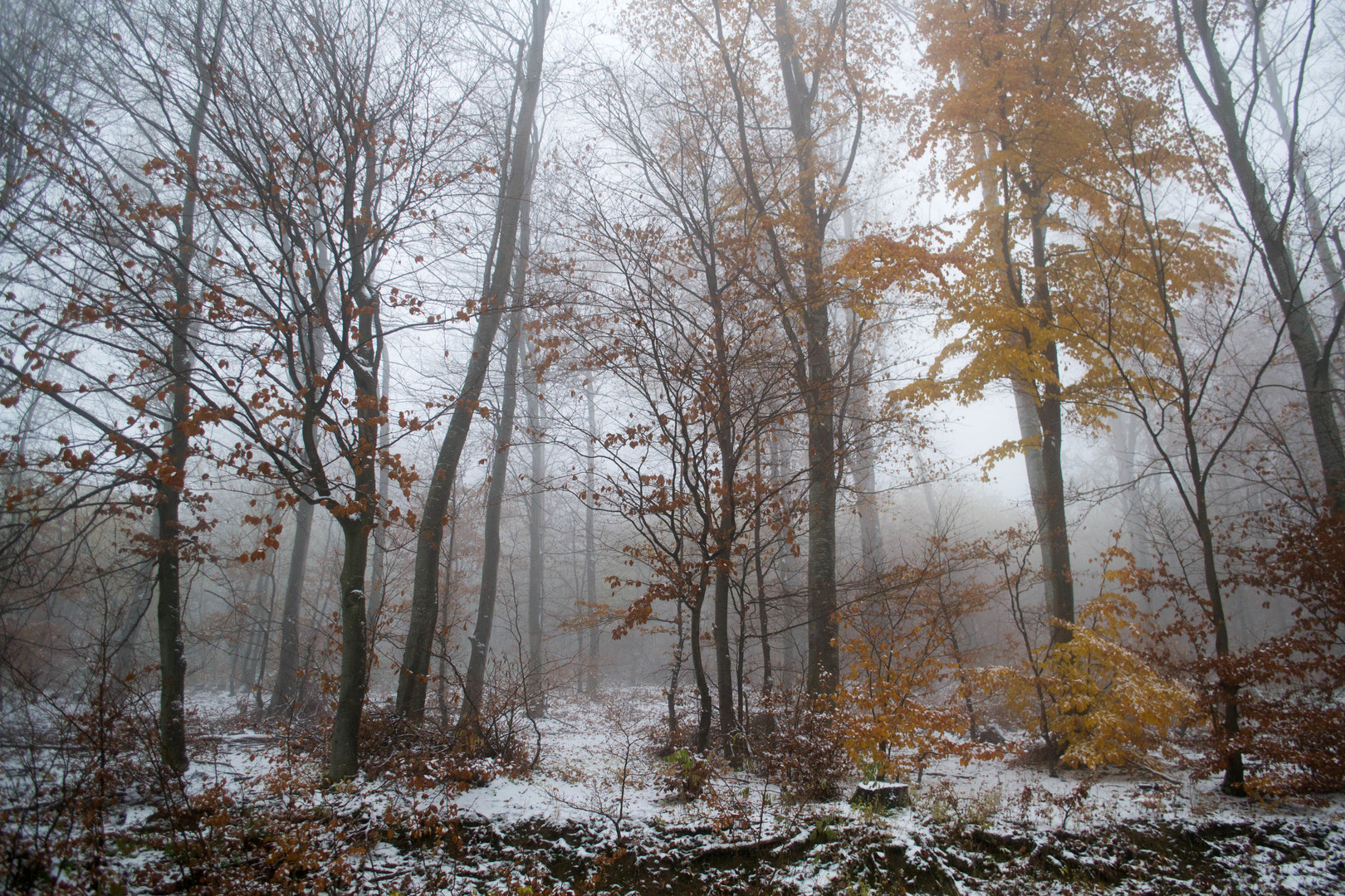 zimski pejzaž 3
