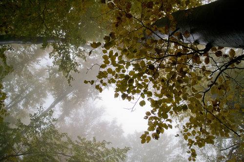 macvanin Jesenje pojedinosti