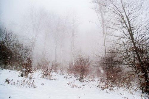 macvanin Pogled na šumu u magli