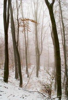 macvanin Pregled šume u belom