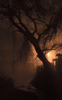 macvanin sanjiva vrba