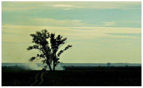 majaview the tree