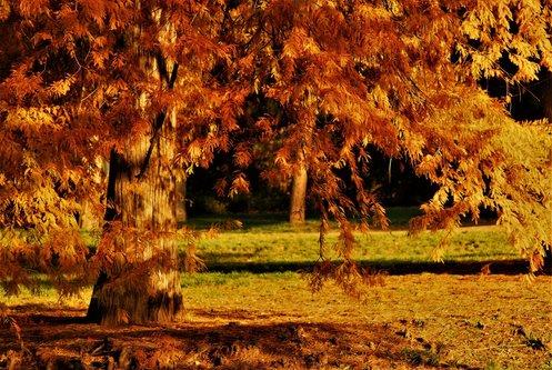 majaview jesen..