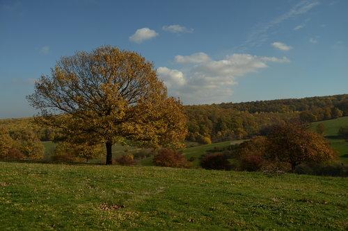 malagrasil jesenji dan