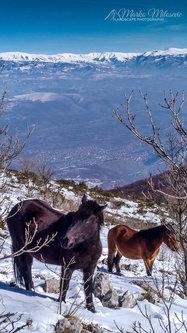 marcomylo Divni konji na Divnoj gorici