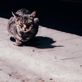 marijadragicevic Ulična mačka