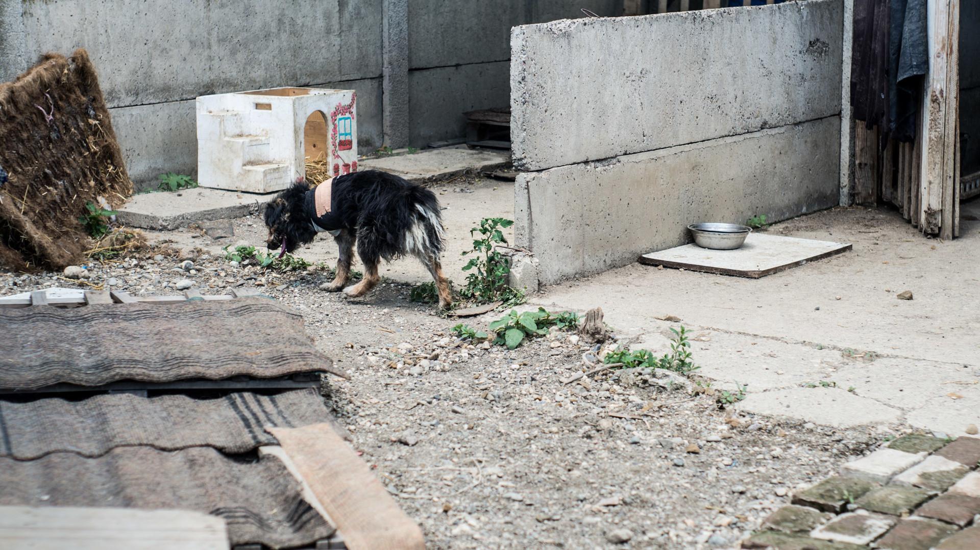 Napušteni pas