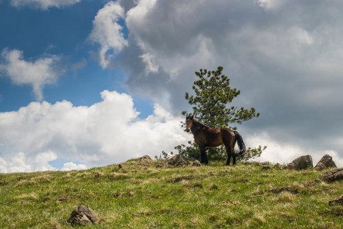 markovl Divlji konj na Stolovima