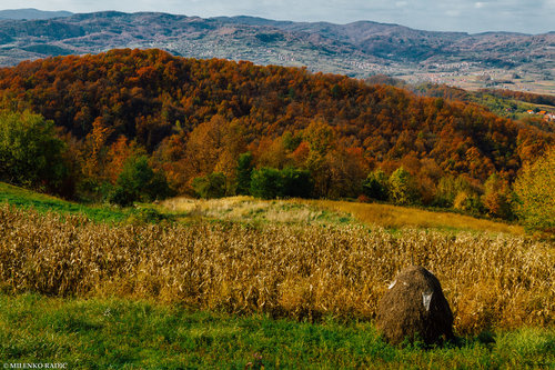 milenkoradic Jesen u zavicaju