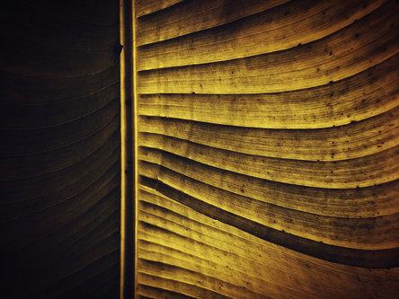 milos_krstic Golden leaf