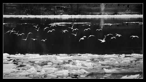 milos_krstic Opet ptice