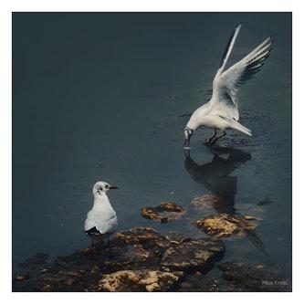milos_krstic Pticice