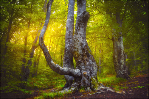 milos_krstic Drvo sa Grze