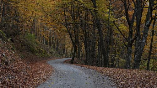 mklun Jesen, moje godišnje doba