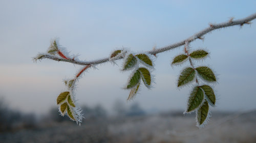 mklun Povratak zime
