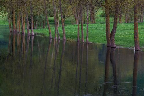 mklun Proljetna refleksija