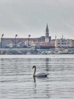 mrEkoify Swan