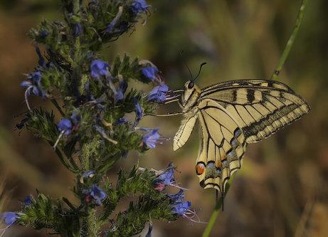nagual Butterfly.JPG