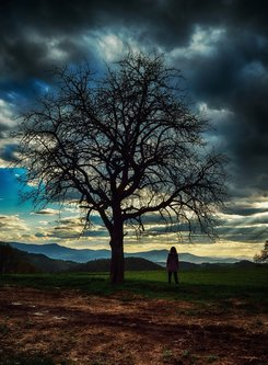 nagual Sky, tree and man ???