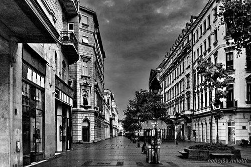 nebojsa Beograd