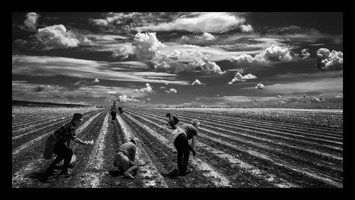 nemanjajapa Radovi u polju