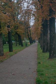 nikola12 Jesen, u kozi dolazi mi jesen