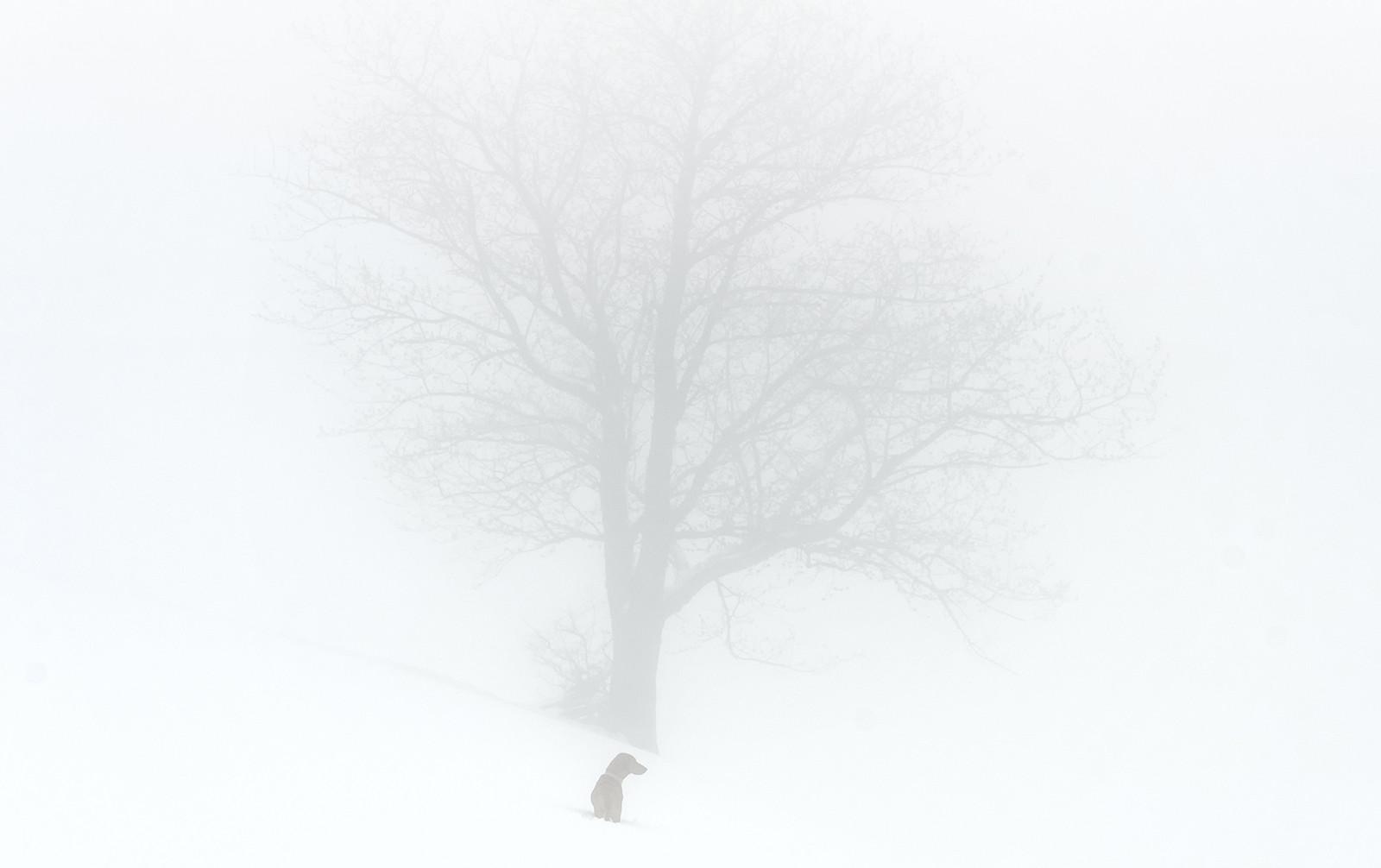 Baš magla