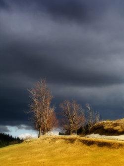 nikolasabelana Oblak, al` pravi