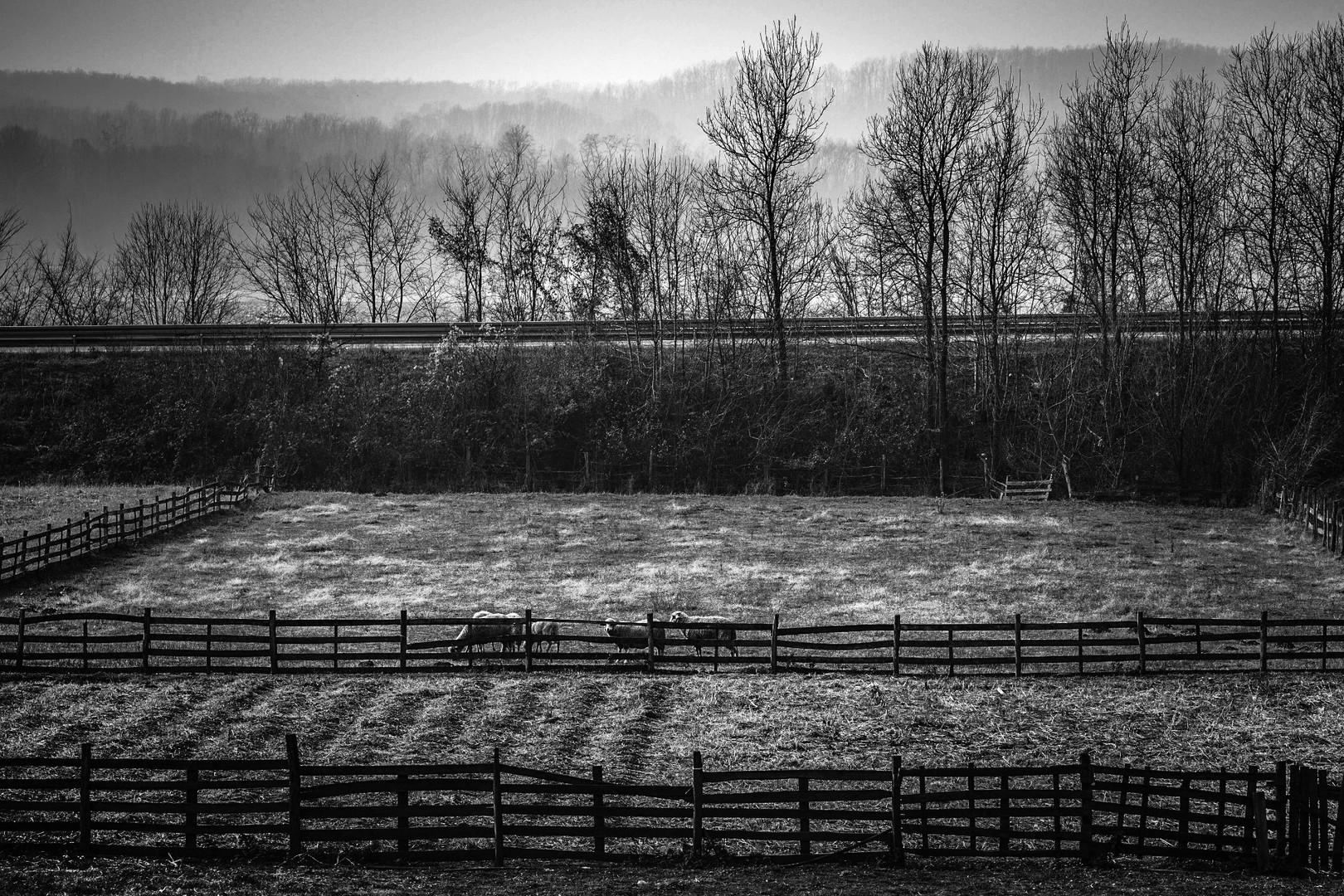 Iza ograda