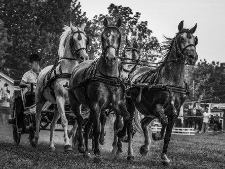 petarlackovic Konji