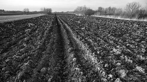 petarlackovic Poljoprivredni pejzaž