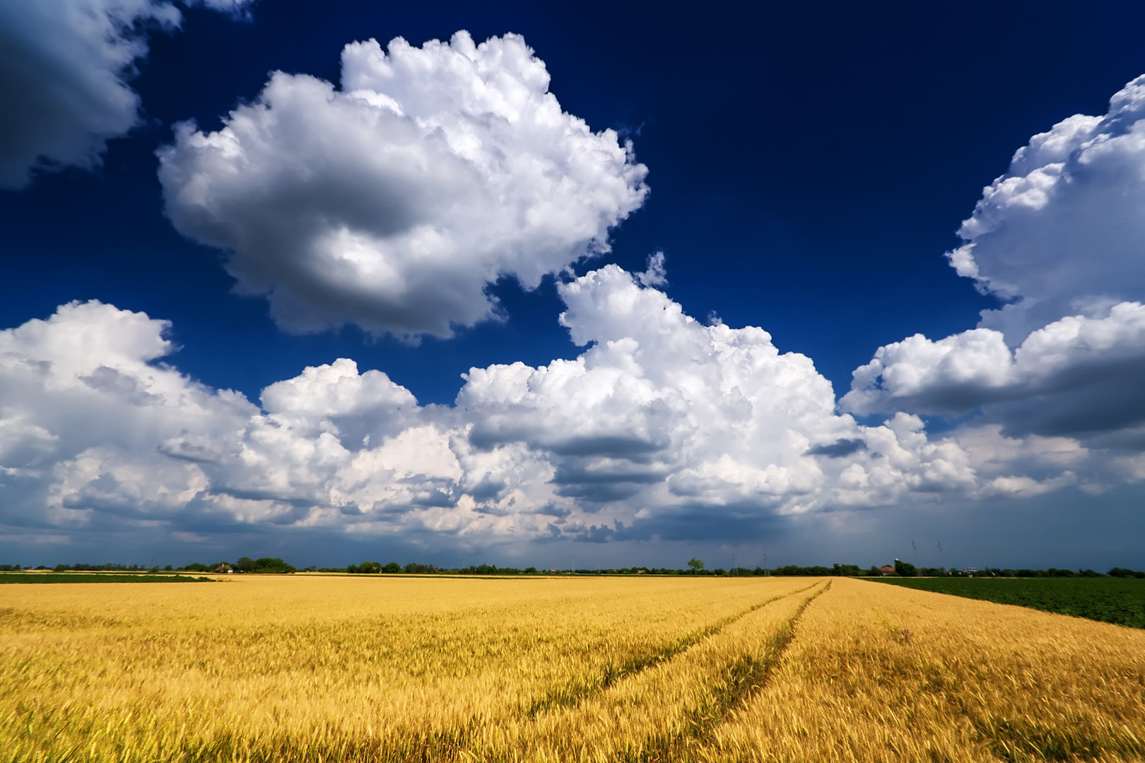 Golden fields and big white clouds