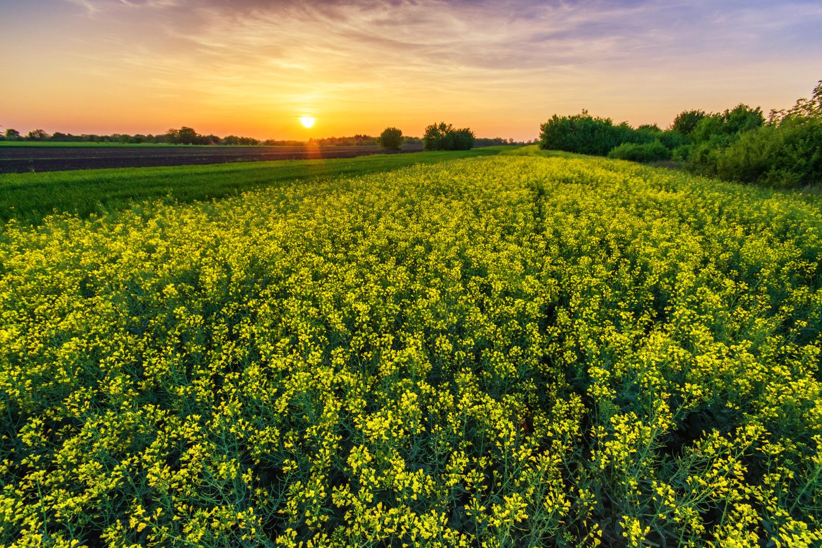 Polje u proleće