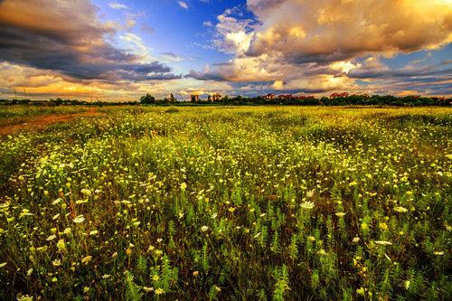 petarlackovic Cveće na polju u zalazak