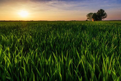 petarlackovic Kućica u polju