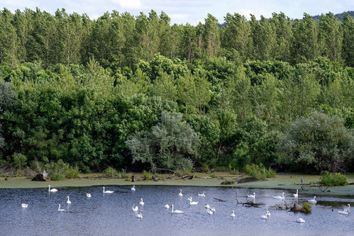 petarlackovic Pejzaž prošaran belim pticama