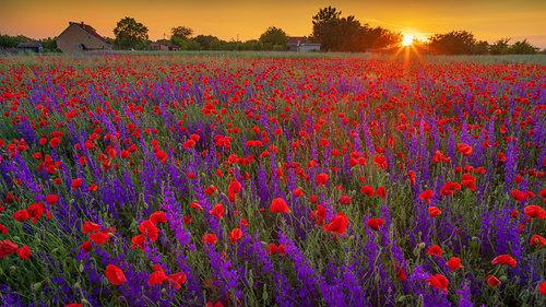 petarlackovic Polje u boji