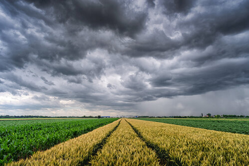 petarlackovic Pred kišu