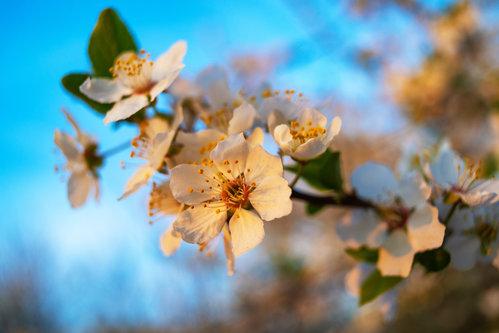 petarlackovic Vreme je proleću