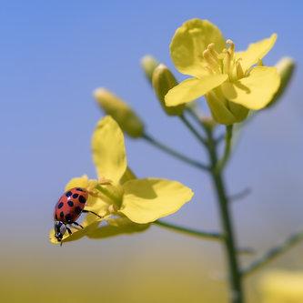 petarlackovic Buba i cvet