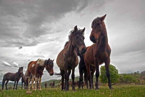 photosenad Divlji konji s Batova