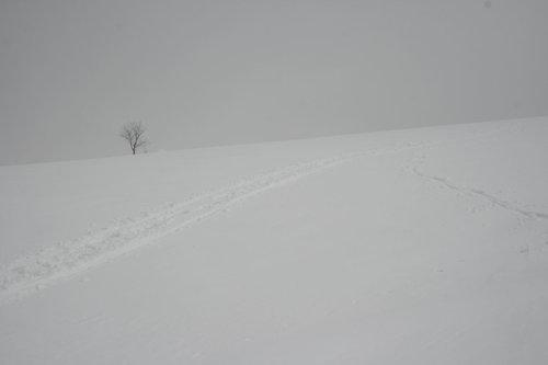 producer Staze u snegu