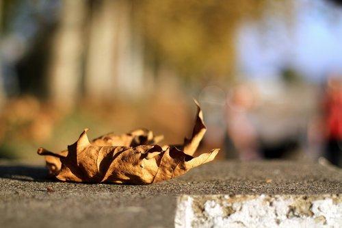 prolaznik Bijaše lijepa ova jesen