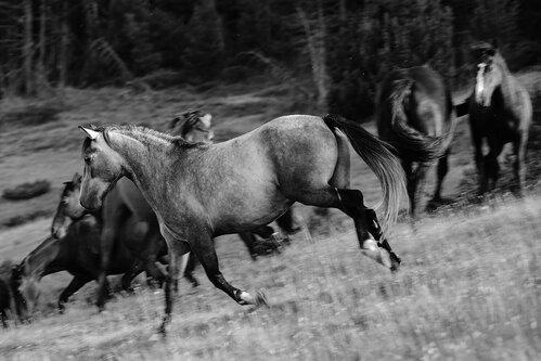 rabos Zeleni konj