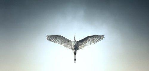 radnaskela Gospodjica ptica