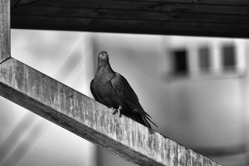 renatak golub