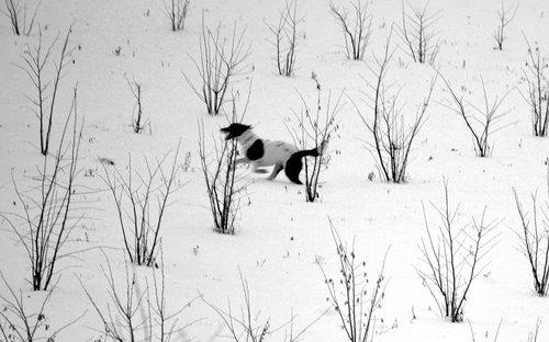 renatak u snegu